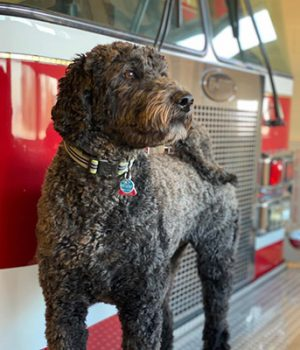 Dog by fire truck